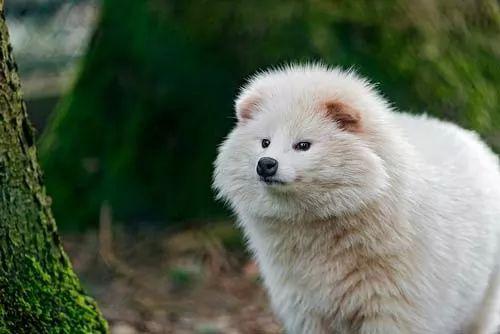 هل هناك اختلاف بين حيوان الراكون وكلب الراكون ؟