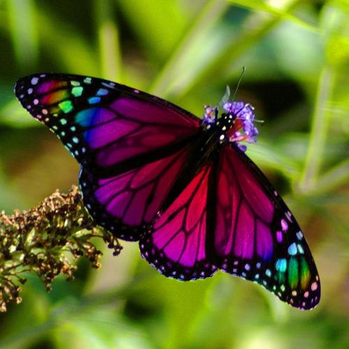 butterfly-rainbow.jpg