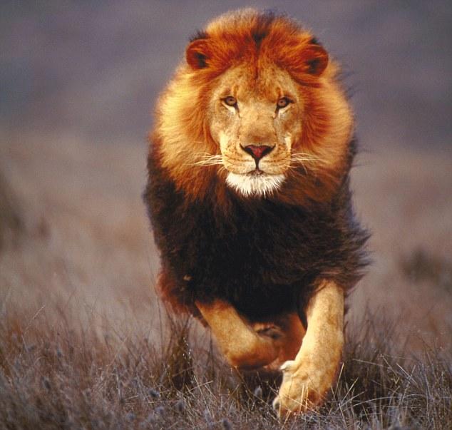 https://i1.wp.com/www.universeofsymbolism.com/images/lion-2.jpg