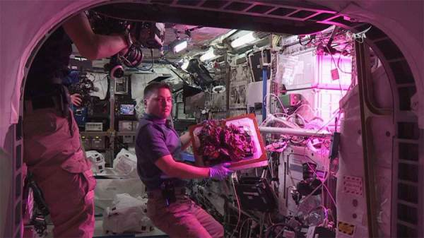 Yummy! ISS Astronauts Eat First Space-Grown Food ...