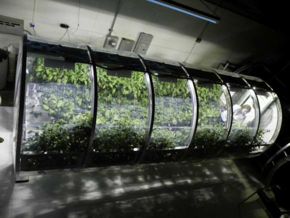 This 18 foot long tube is a prototype of a bioregenerative life support system. The system grows crops, but also regenerates water and air. It's at the University of Arizona's Controlled Environment Agriculture Center. Image: University of Arizona