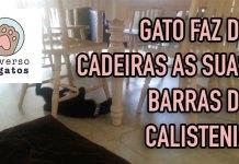 Gato calistenia faz de cadeiras suas barras de exercício