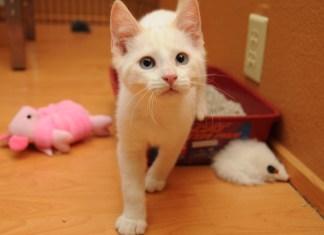 caixa de areia para gatos evite problemas