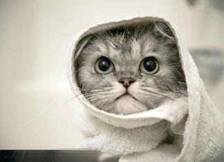 10 dicas de como dar banho ao seu gato