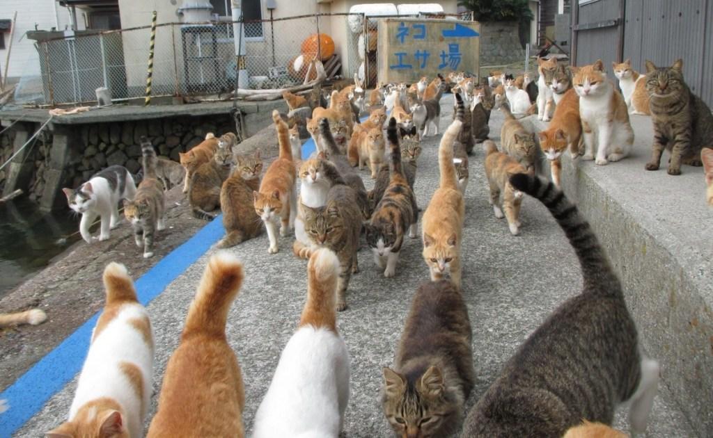 paraiso-dos-gatos-japao-14