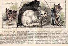 As 10 raças de gato mais antigas