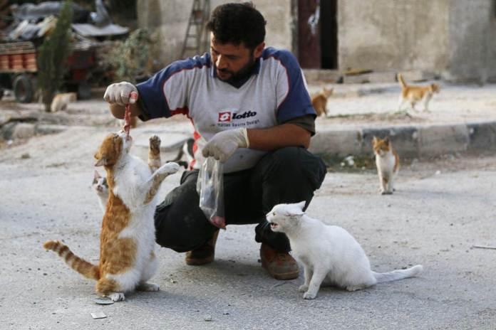 o-homem-que-cuida-dos-gatos-abandonados-em-aleppo-1