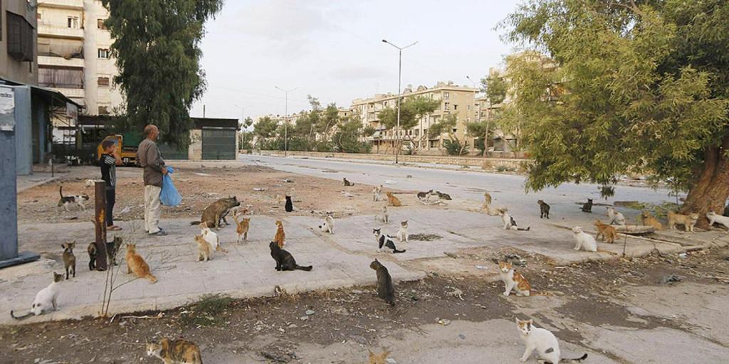 o-homem-que-cuida-dos-gatos-abandonados-em-aleppo-2
