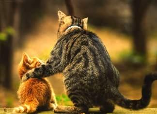 gatinhos vs gatos como escolher