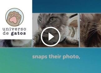 Nova APP permite que seu gato fique louco com Selfies