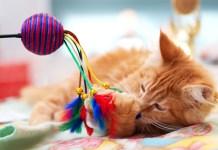 gato_brinquedos_com_ruido