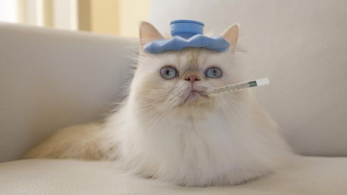 temperatura do gato