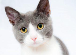 Adotar um gato sénior