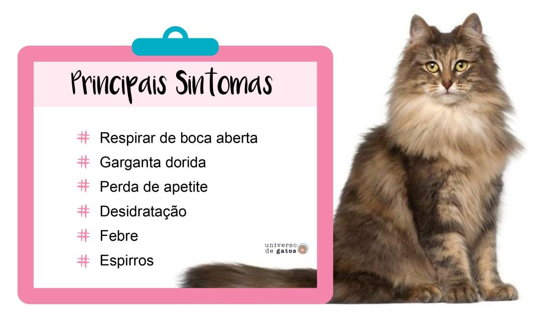 gripe felina