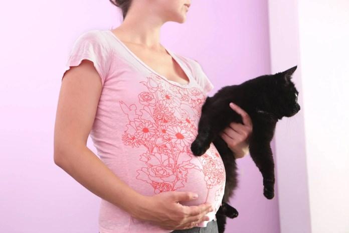 Gatti e gravidanza