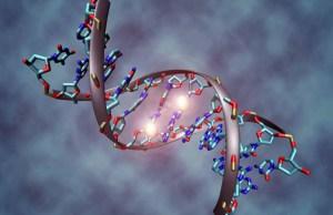 genoma rappresentazione grafica