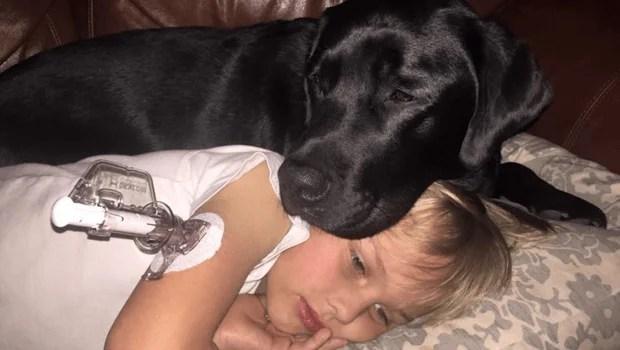 cane salva un bambino