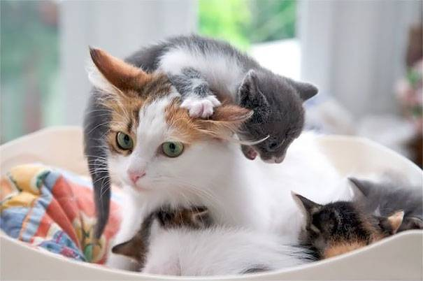 funny-animal-motherhood-photos-cats-dogs-pet-moms-16-5767d6c70d882__605