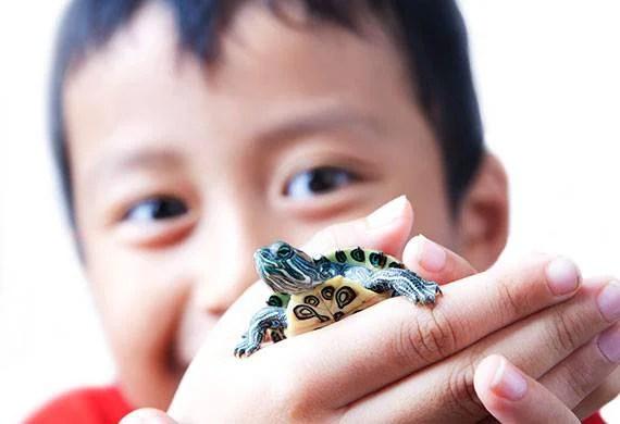 Tartarughe pericolose bambini