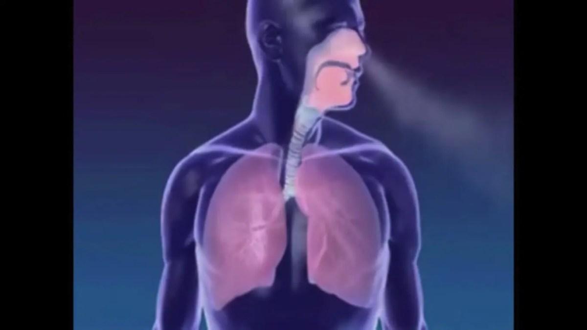 Vídeo Incrível Mostra Como a Respiração Funciona, Ótimo Para Quem Pratica Yoga!