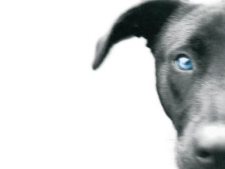 TIMBUCTU' Paul Auster Recensioni Libri e News UnLibro