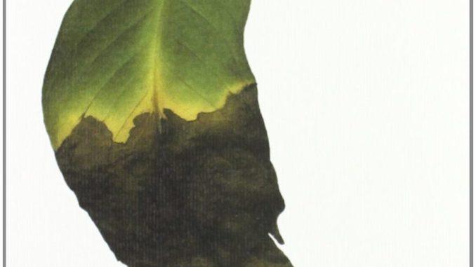 IL MARE DEGLI ALBERI MORTI Kenji Nakagami Recensioni Libri e News UnLibro