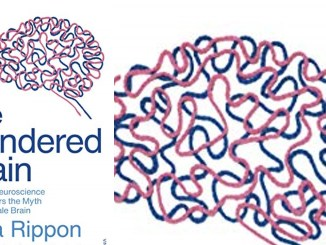 The Genered Brain
