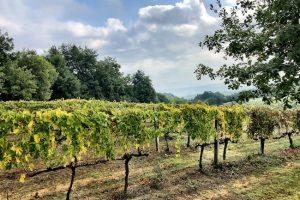 https://i1.wp.com/www.unlockitaly.com/wp-content/uploads/2020/09/Montalcino-vines-300x200.jpg?resize=300%2C200&ssl=1