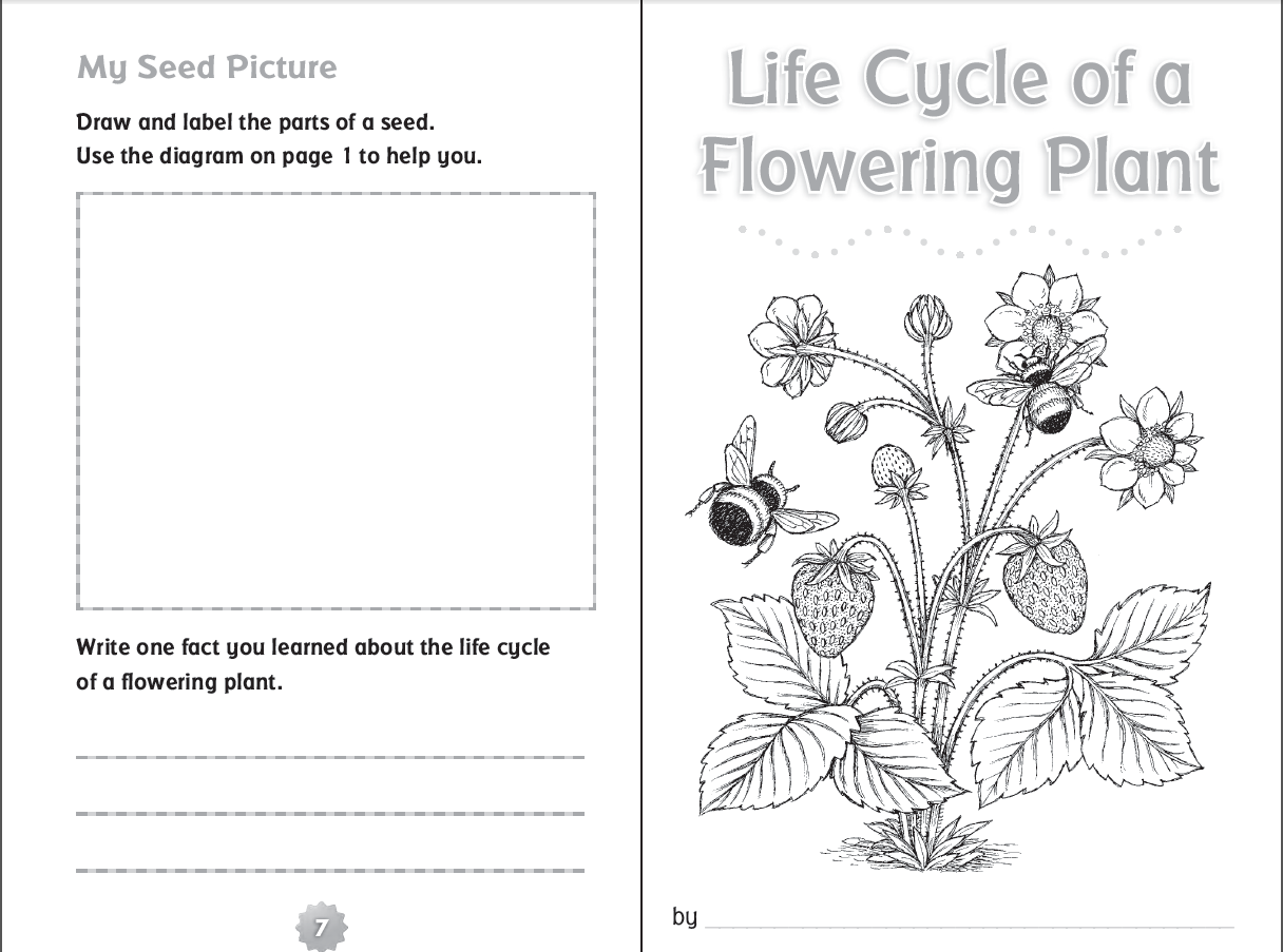 Plant Worksheets 3rd Grade