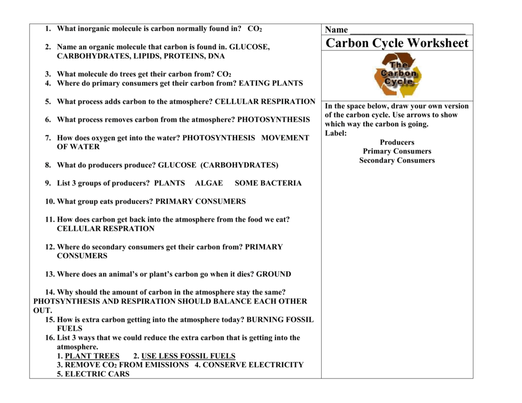 Nitrogen Cycle Worksheets With Answers