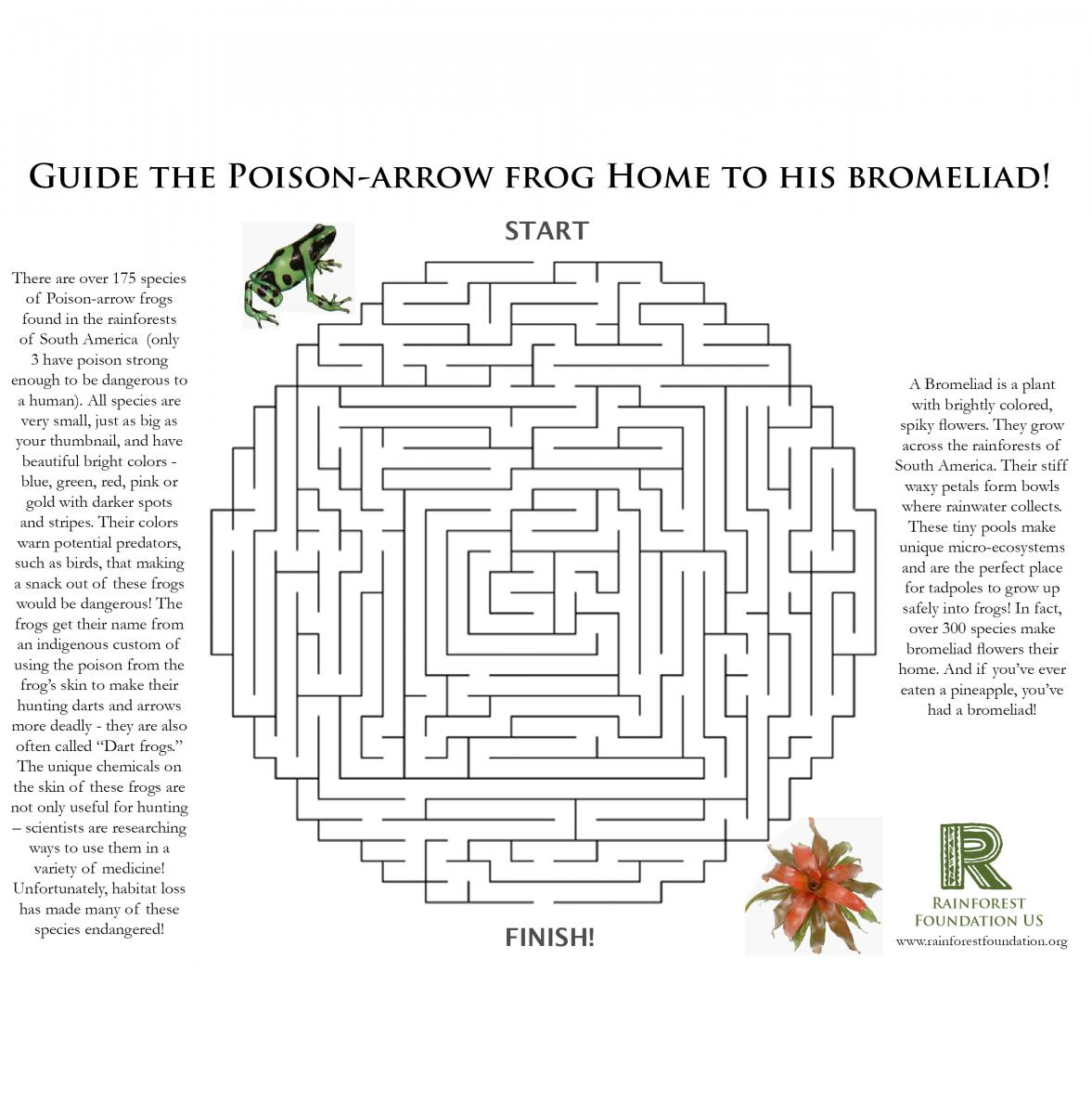 Rainforest Games And Worksheet Activities Worksheets Samples