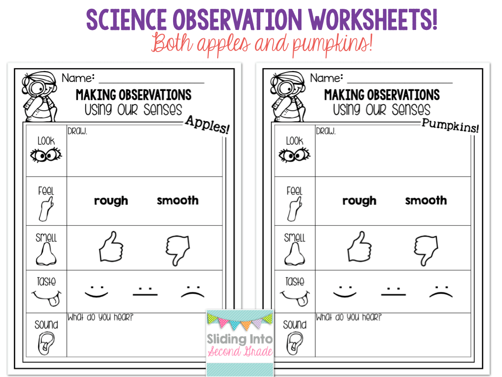 Observation Worksheets For Science
