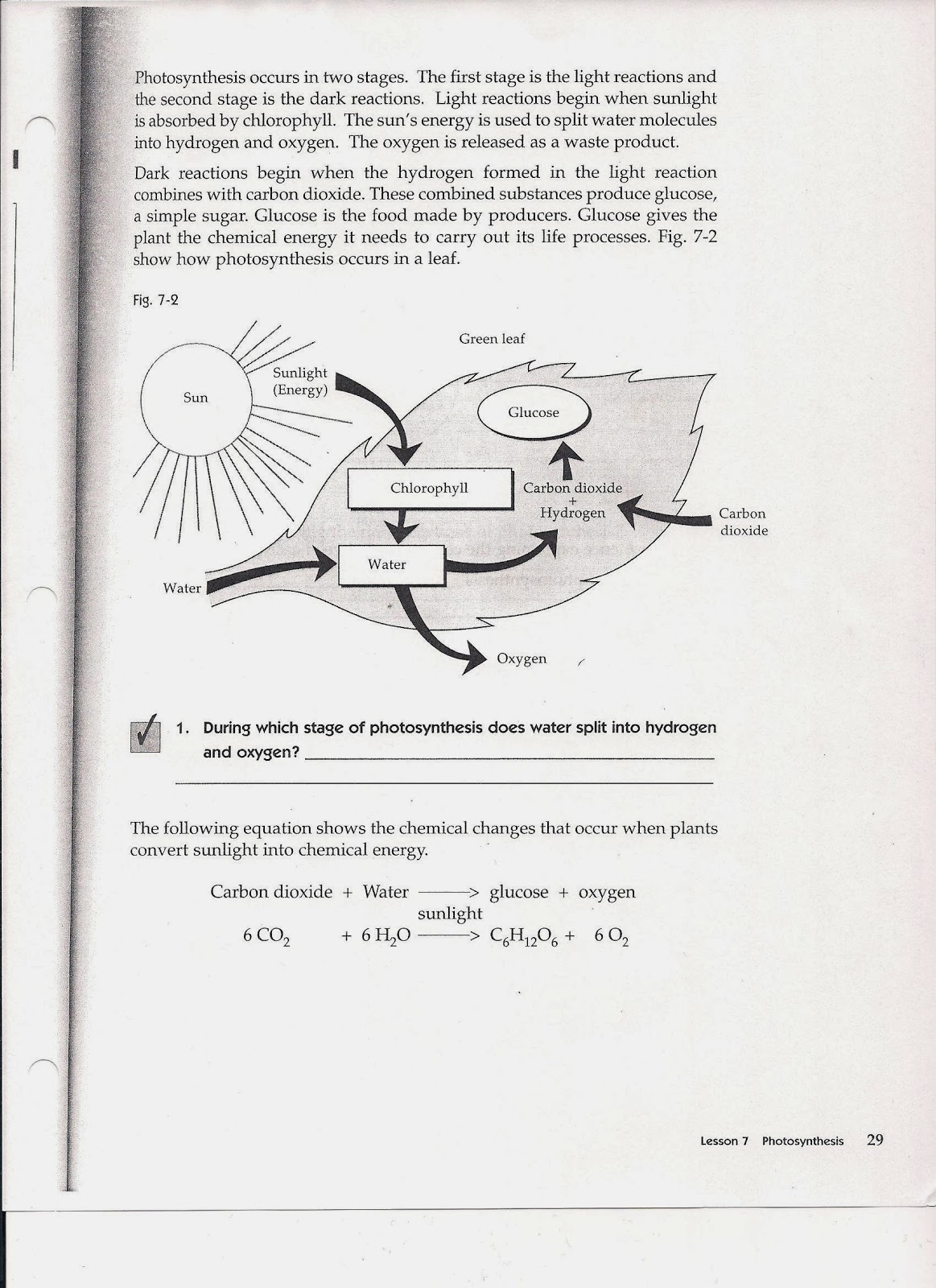 Structures Of Photosynthesis Worksheets