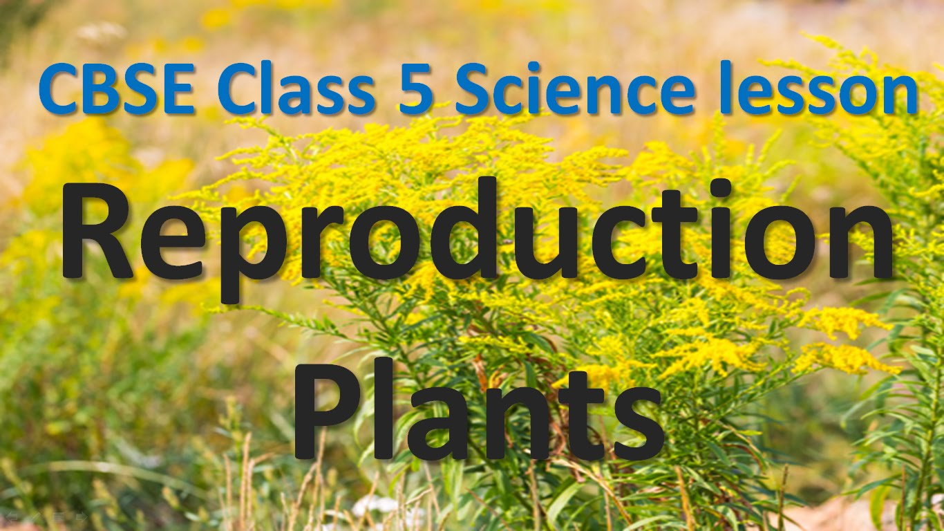 Plant Reproduction Worksheets For Kids