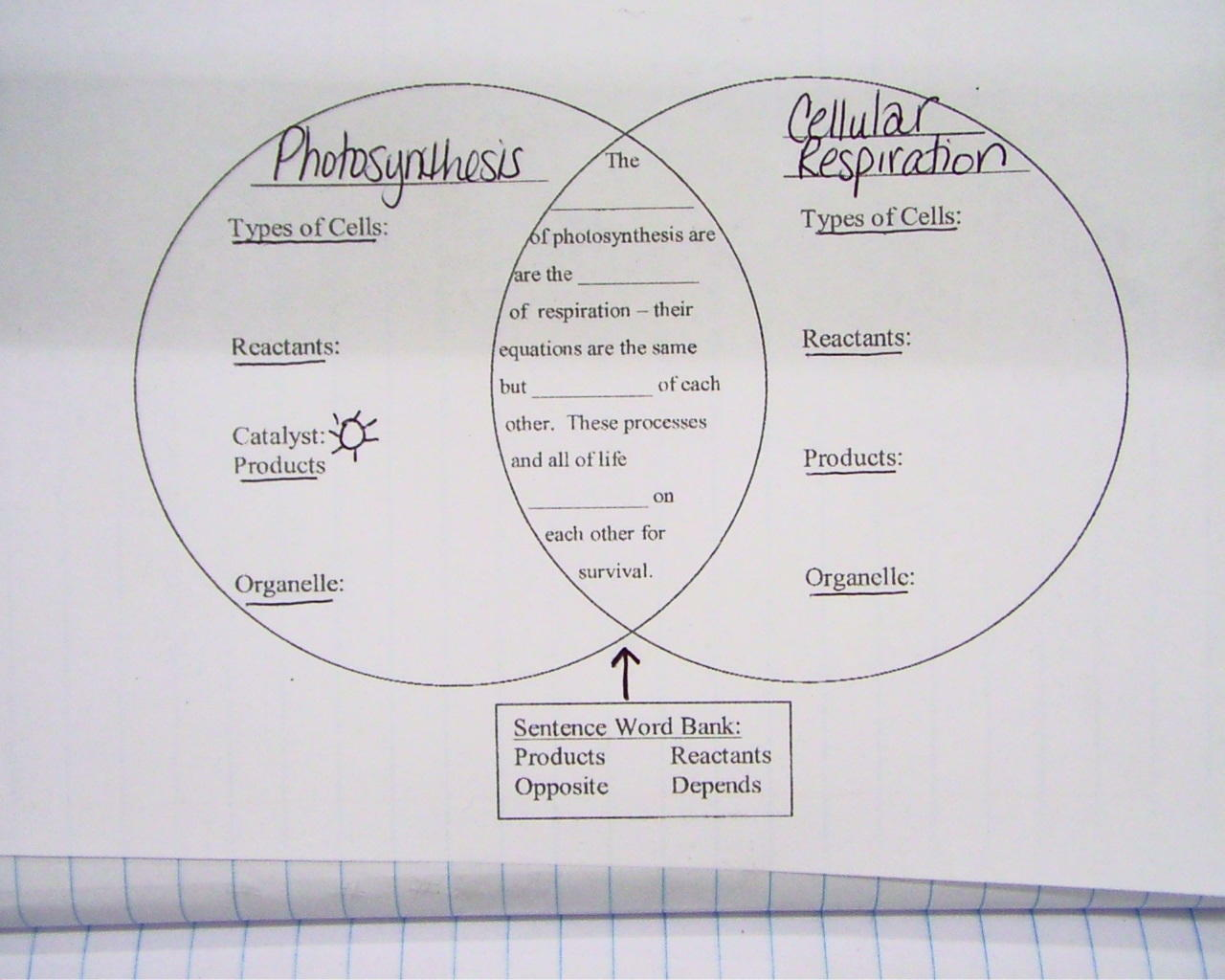 Cellular Respiration Diagram Worksheet Worksheets Samples