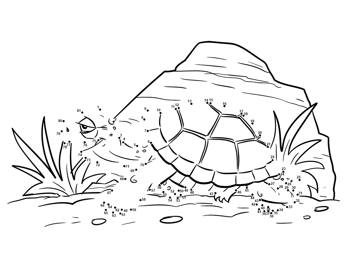 Turtle Worksheets For Kindergarten