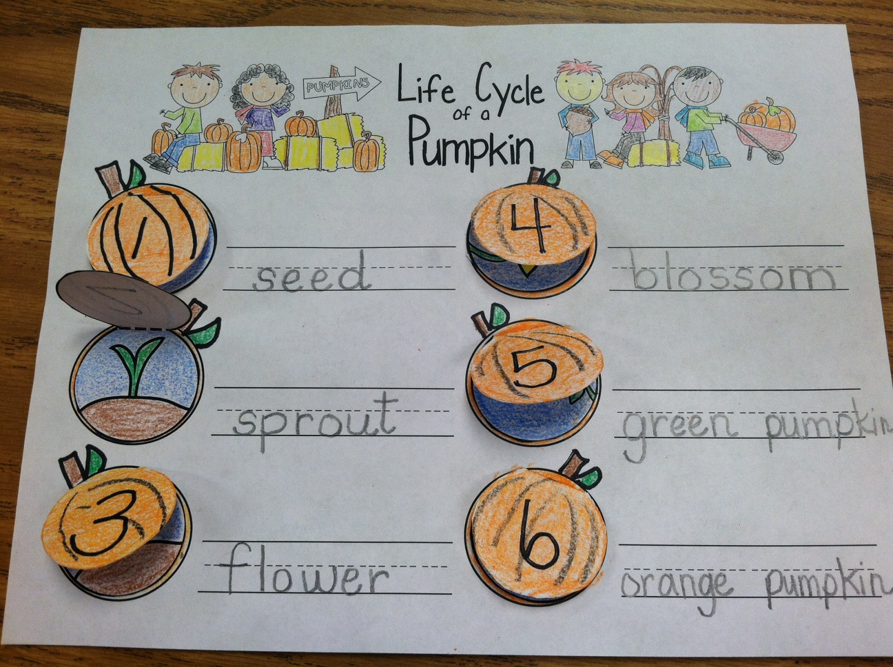 Lifecycle Of A Pumpkin Worksheets