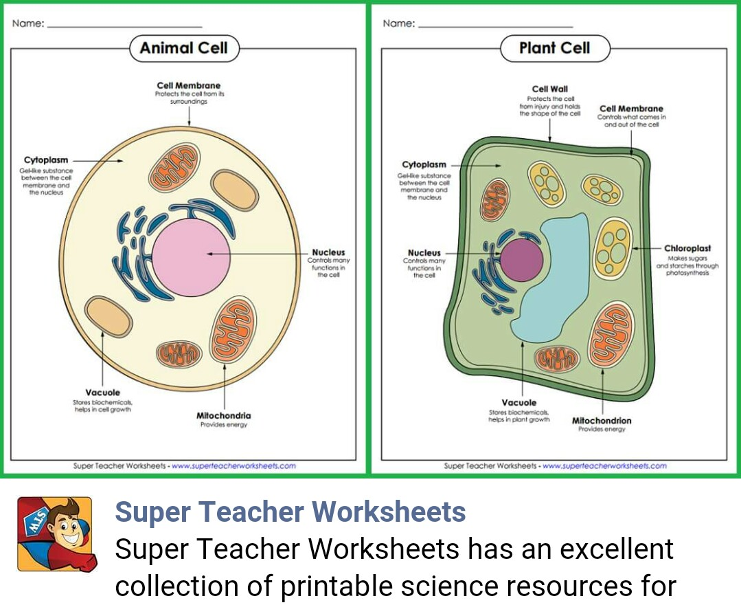 Super Teachers Worksheets Grammar