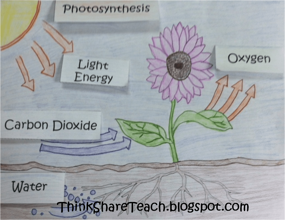 Photosynthesis Worksheets For Grade 4