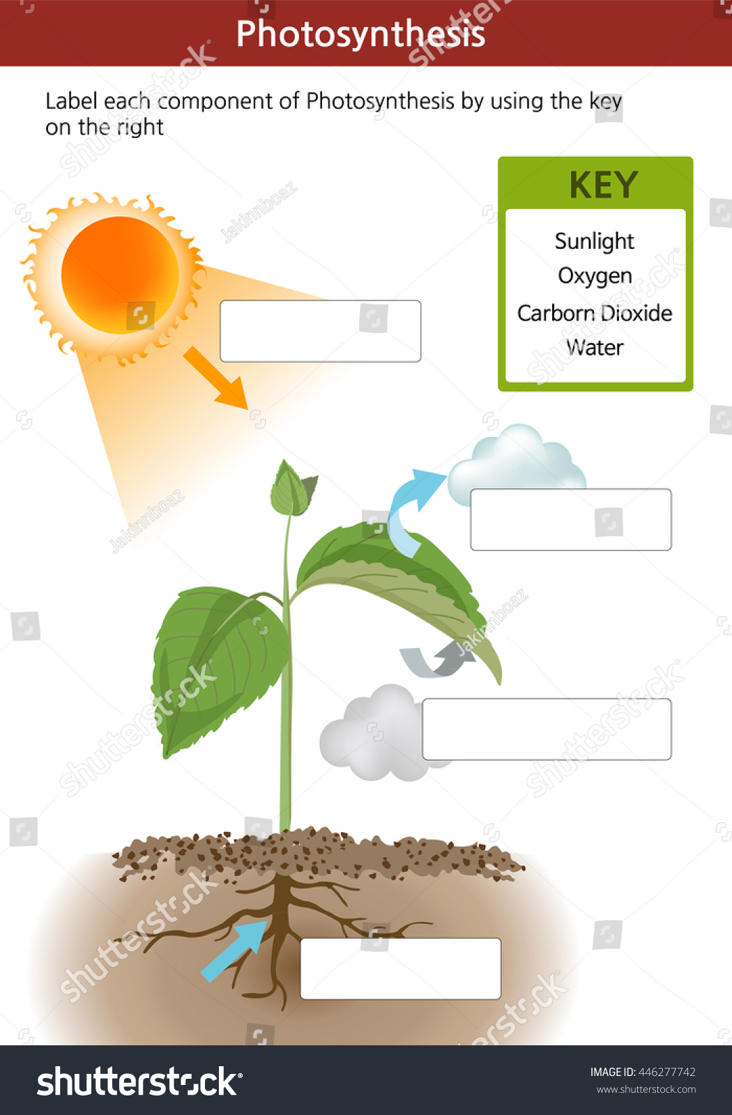Digrams For Middle School Photosynthesis Worksheet