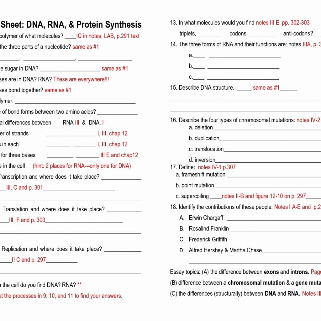 Dna Rna And Protein Synthesis Worksheets Answer Key