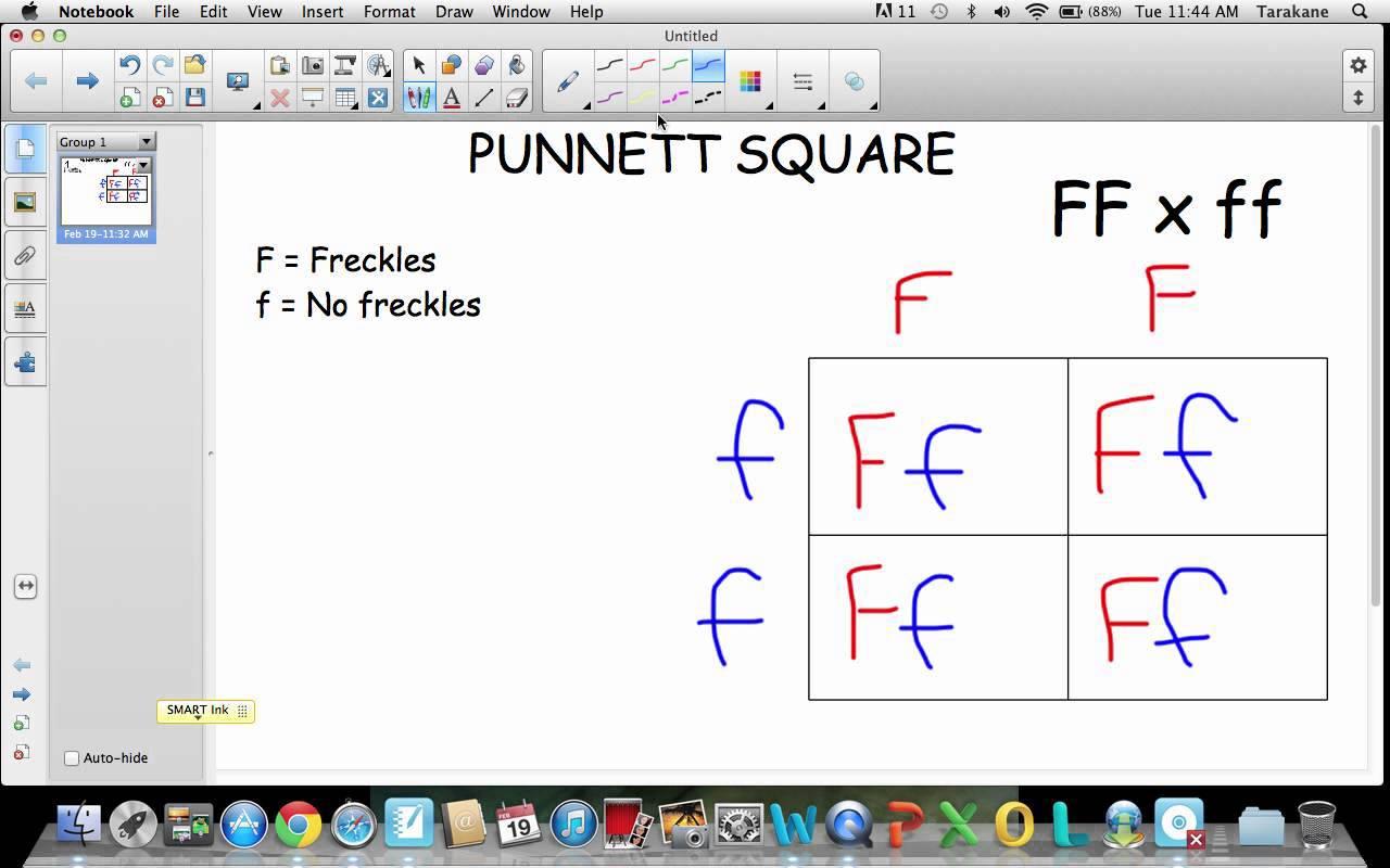 Punnett Square Worksheets 5th Grade