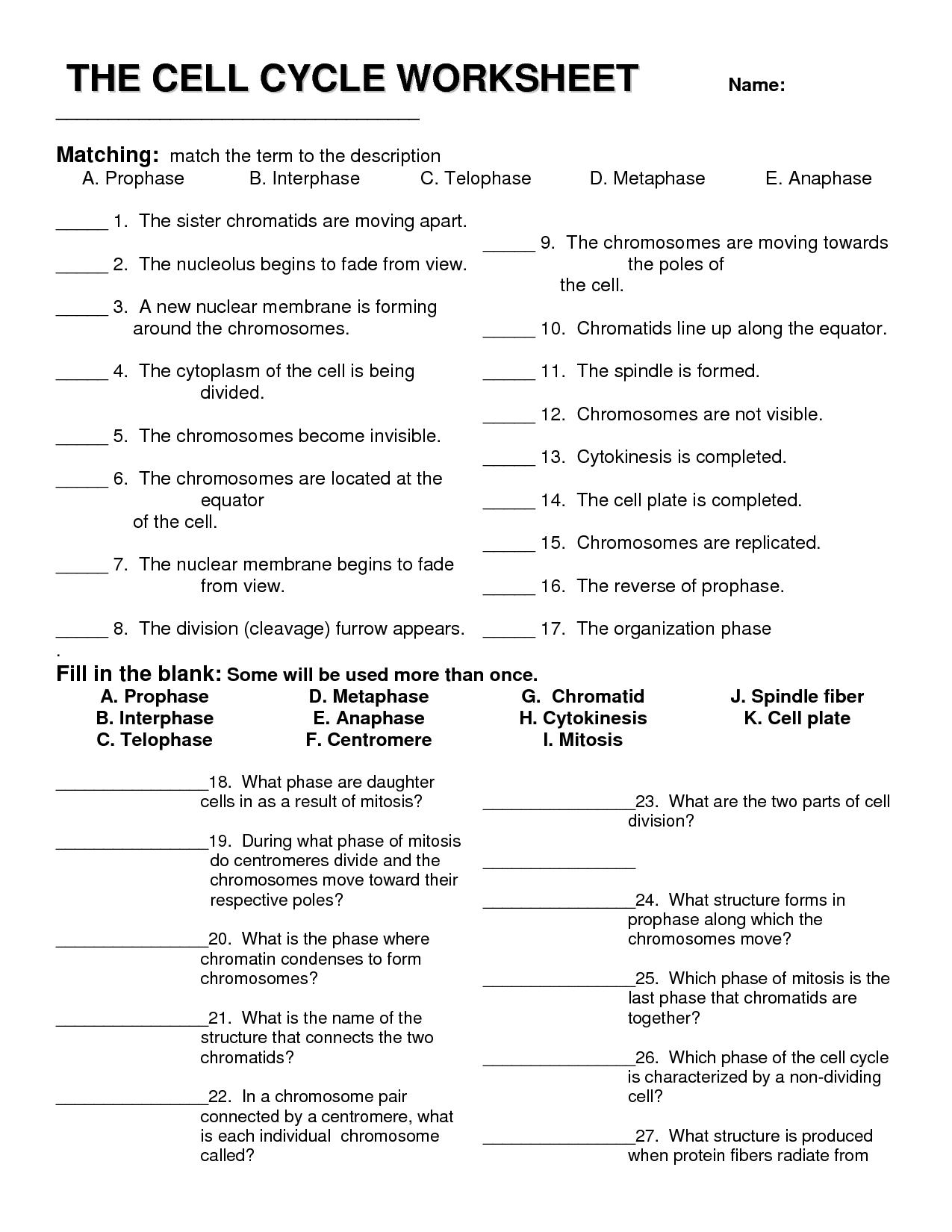Cell Division Worksheets