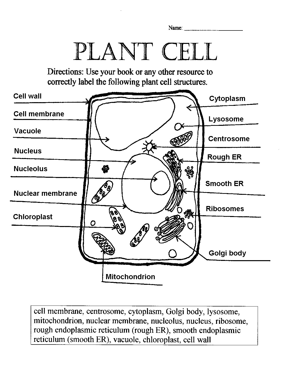 Comparing Plant And Animal Cells Venn Diagram Worksheet