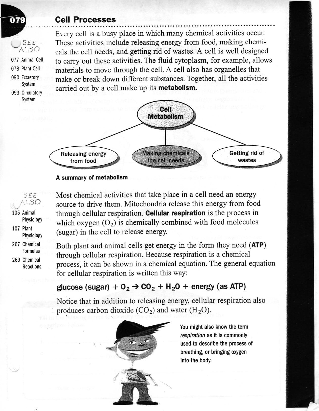 Cellular Processes Worksheets