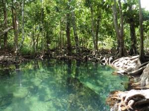 Parque Natural de Tha Pom Khong Song Nam
