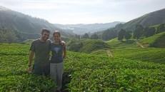 Plantación de té Boh en Cameron Highlands