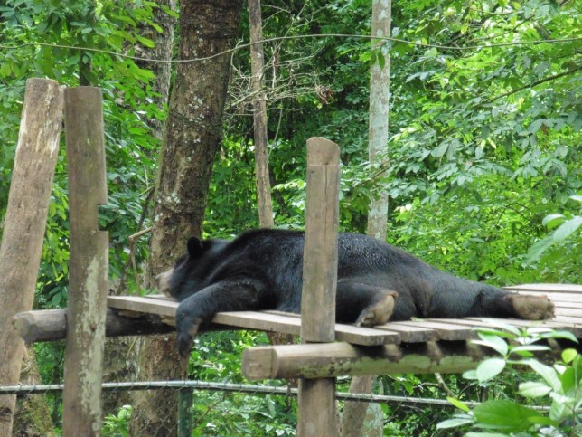 Tat Kuang si Bear Rescue Centre