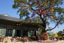 Festival del Crisantemo en el templo budista de Jogyesa