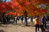 Espectáculo de la hoja roja en Seoraksan